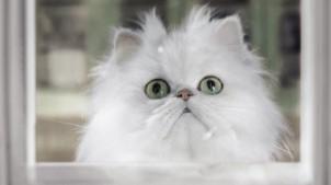 Specsavers cat